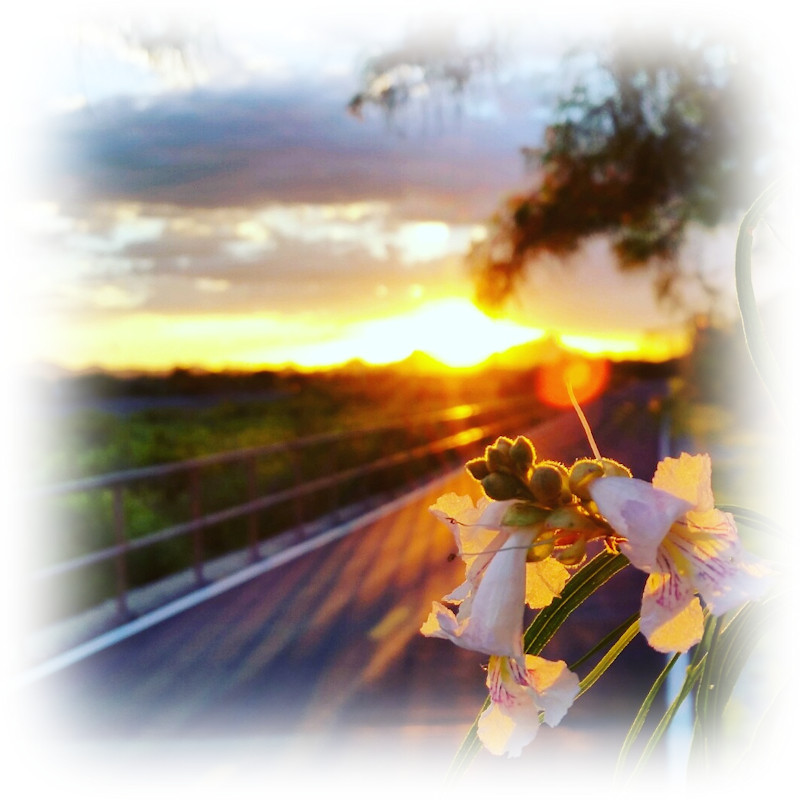 The Loop Desert Sunset Wildflower Photo by Charles Peden psychic medium animal communicator Tucson Arizona