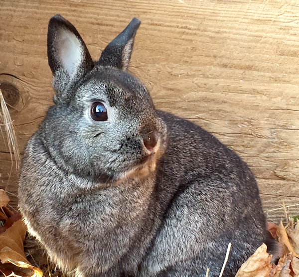 Benjamin Bunny Photo by Charles Peden psychic medium animal communicator Tucson Arizona