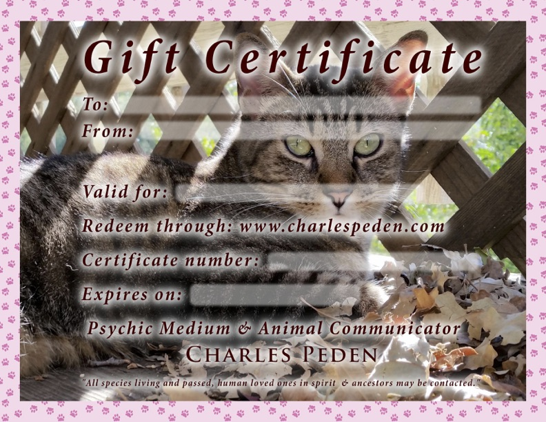 Gift certificate blank with a cat in the background.