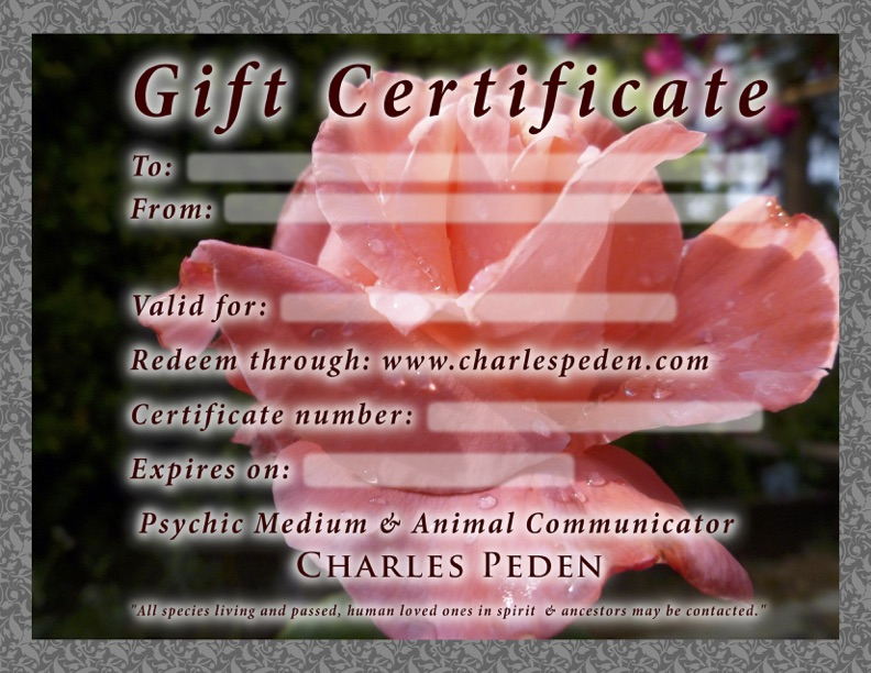 Gift certificate blank with a pink rose in the background.