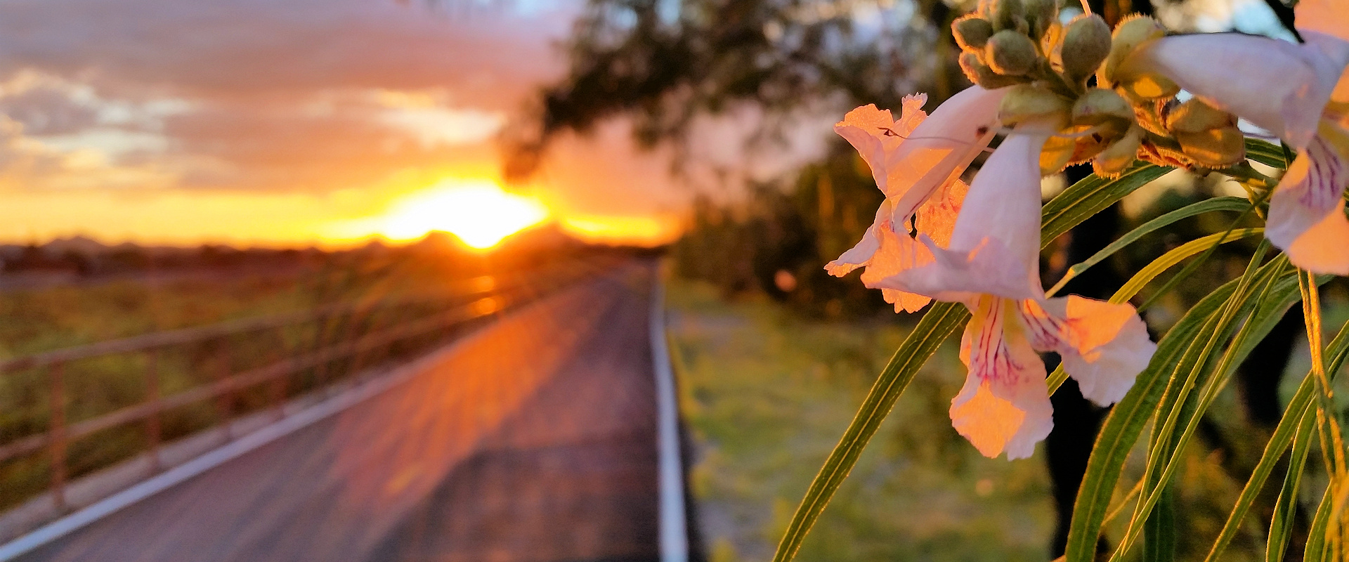 Rillito Loop Warm Sunset Wildflower Photo by Charles Peden psychic medium animal communicator Tucson Arizona