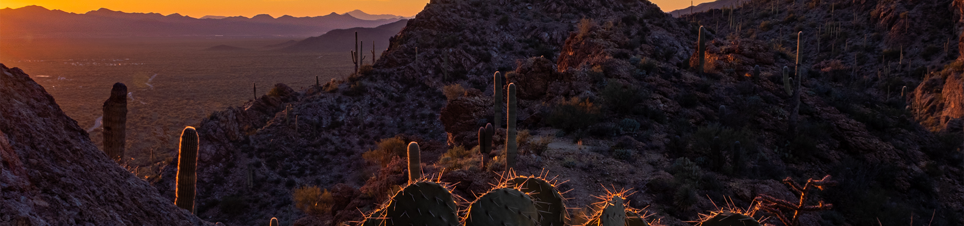 Sunset at Gates Pass west of Tucson, Arizona. The Sonoran Desert at dusk, with prickly pear, cholla and saguaro cacti.